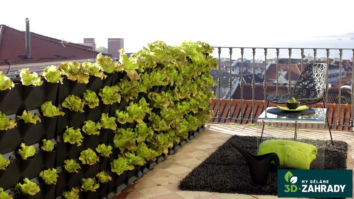 Как посадить базилик